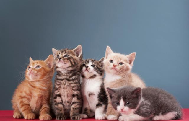 猫の名前が決まらないあなたへ~名付け、ネーミングのポイントをペットショップで働く私が解説します