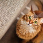 猫に名前を覚えさせる4つの方法と覚えた時の反応~覚えるのにどれぐらいの時間がかかる?