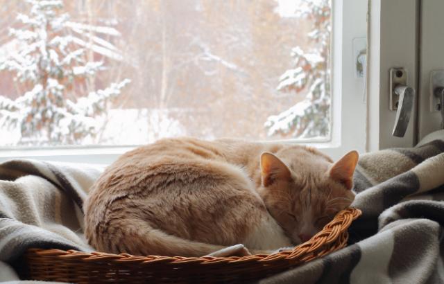 猫は本当に寒いのが苦手?冬を乗り切るための4つの対策