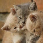 猫の多頭飼いのメリットとデメリットを解説!慣れるまでの期間と過ごし方、注意すべきポイント
