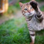 初心者は飼育が難しい?飼いにくい猫ランキング