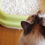 猫のトイレのしつけは簡単です。粗相、失敗の原因と対処法を紹介します。