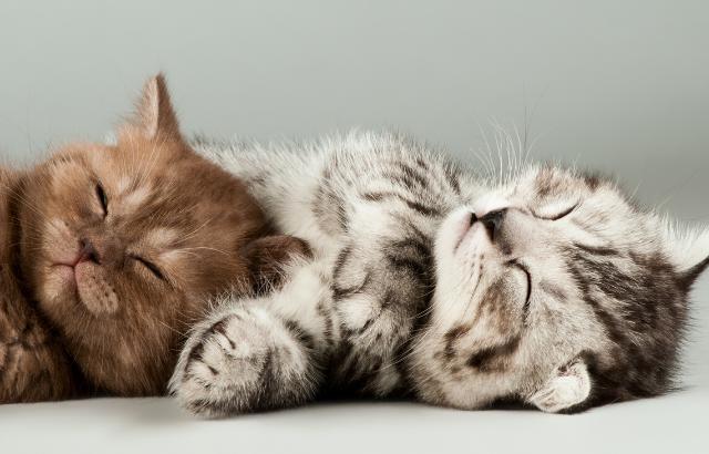 メス猫に人気の名前ランキング〜過去10年の傾向と現在のおすすめの名前